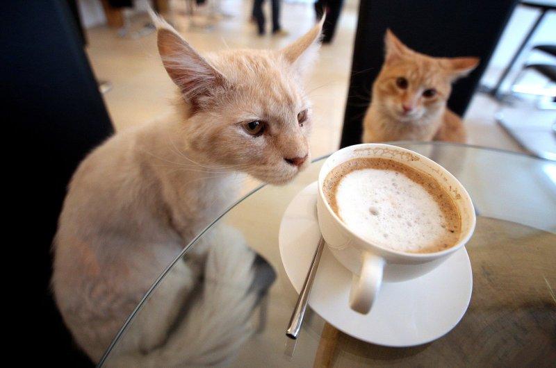 """""""Katzencafé Miezhaus eröffnet am Donnerstag   Nachrichten aus Ostwestfalen-Lippe - LZ.de"""